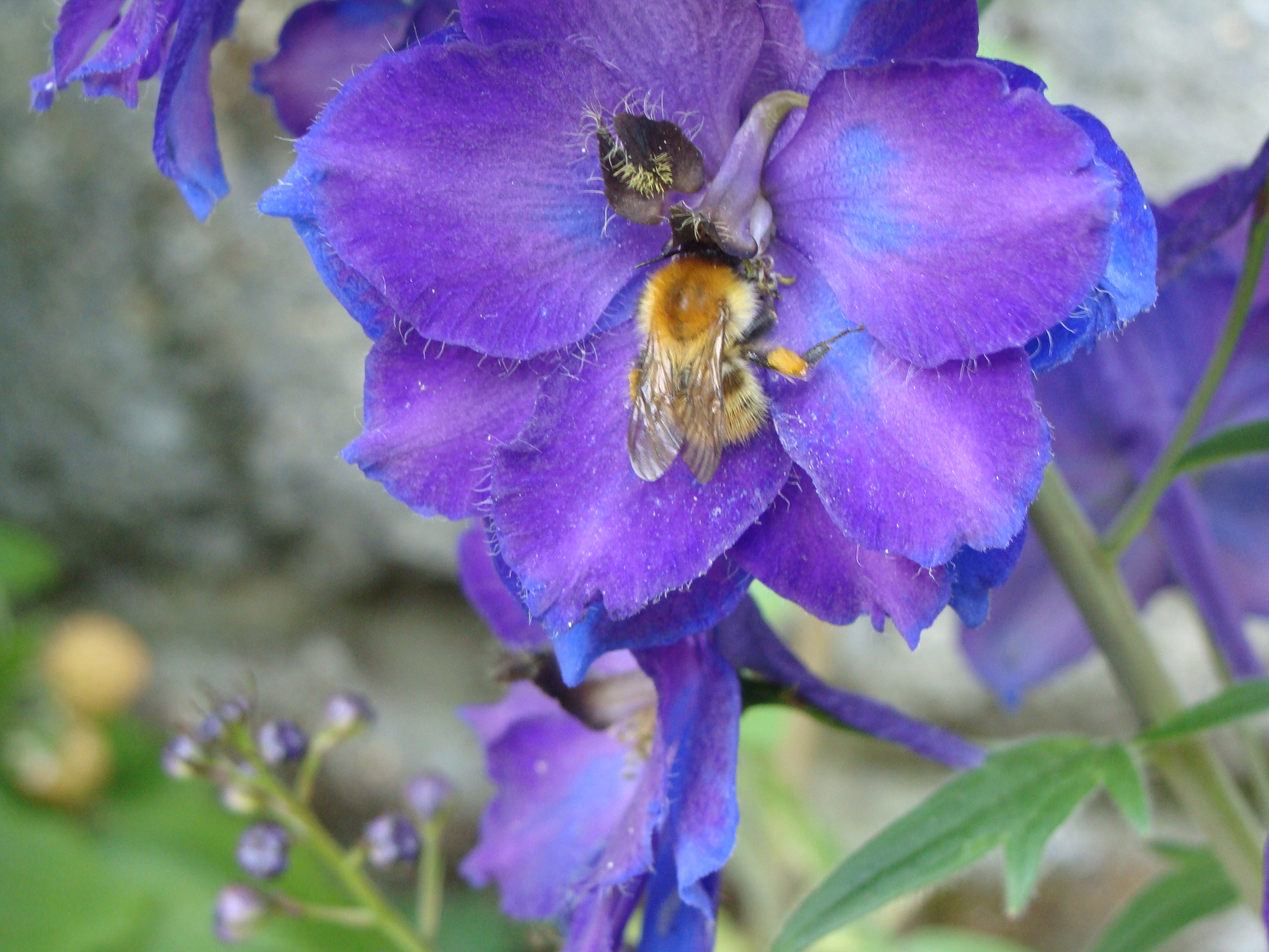 Insecte pollinisateur LDDM